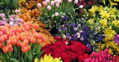 luna-florilor-mai_d05ede3af176bb