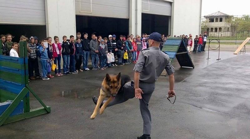 politia de frontiera copii caine