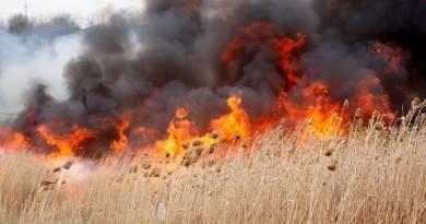 foc-incendiu-vegetatie