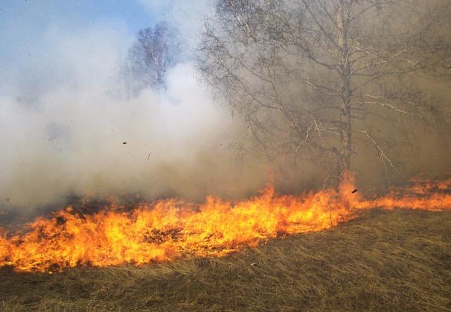 incendiu vegetatie