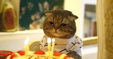 pisica-ziua pisicii