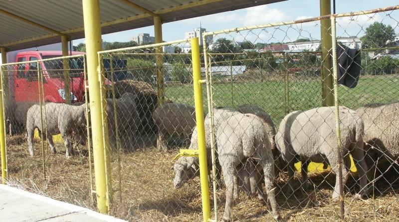 oi-miei-animale-expo-zoo