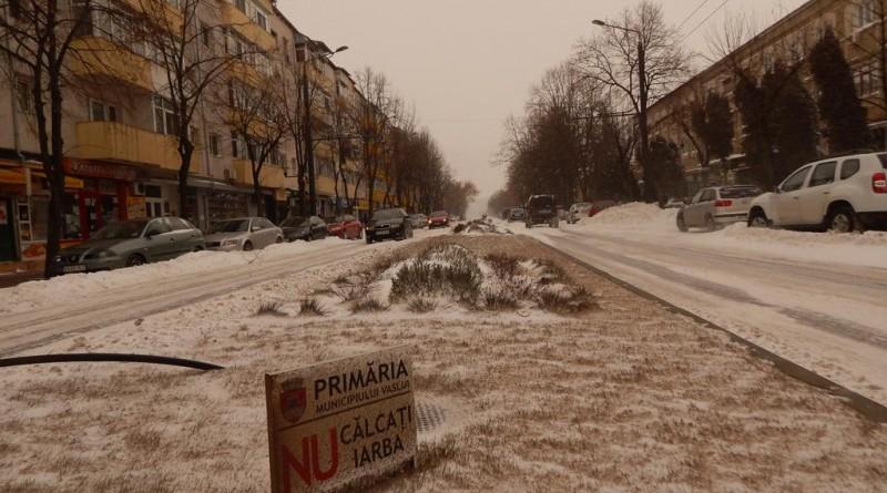 iarna-25