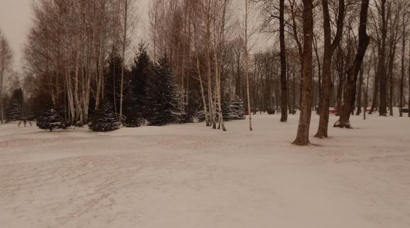 iarna-40