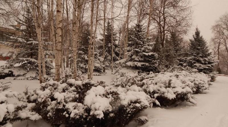 iarna-copou-8