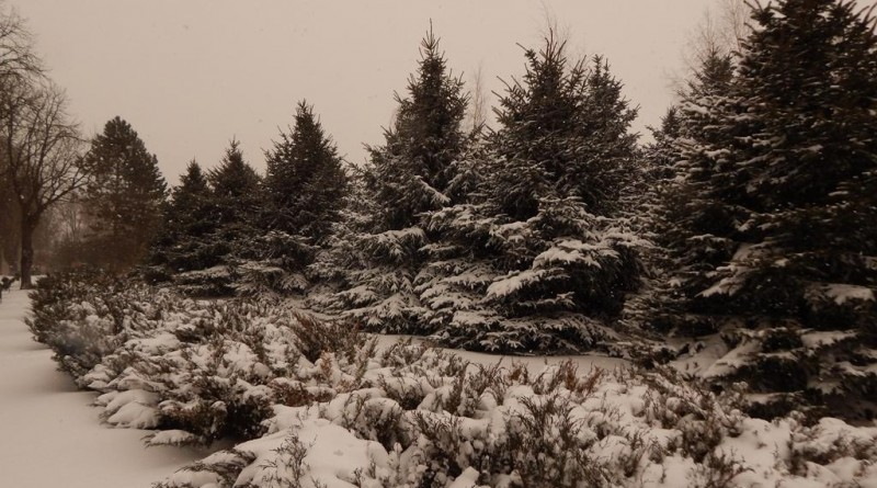 iarna-copou3