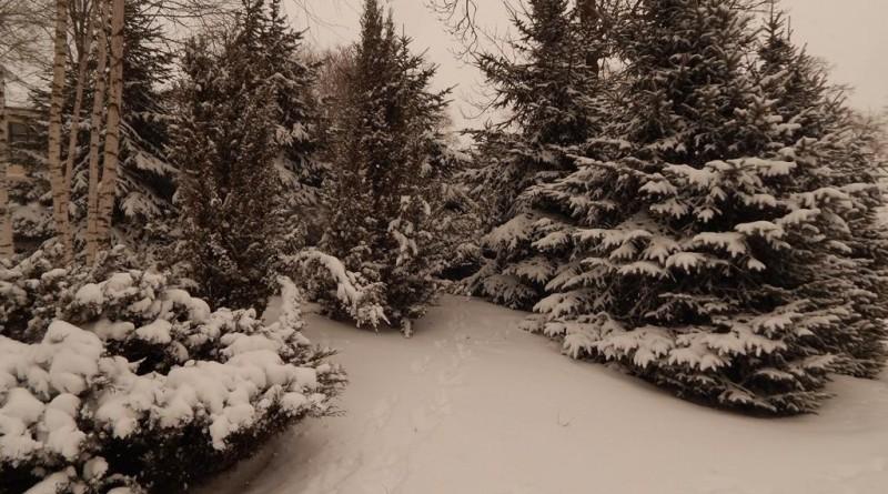 iarna-copou9
