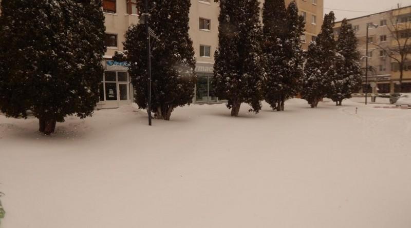 iarna29