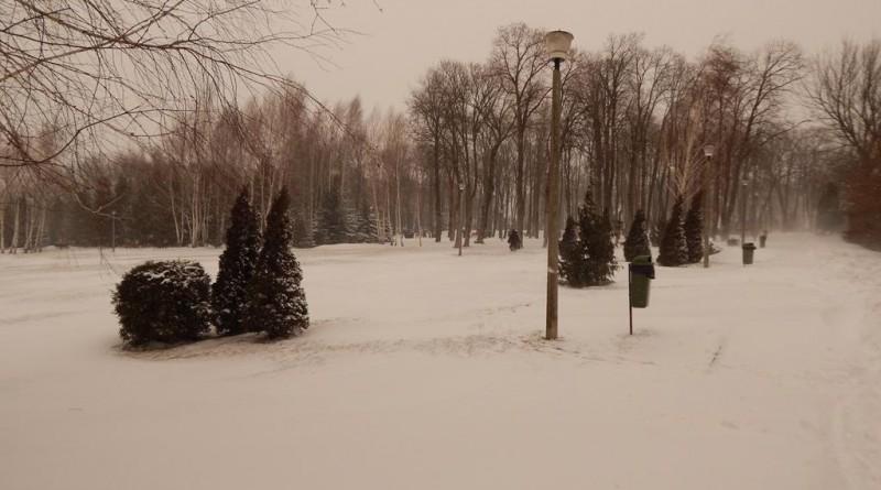 iarna38