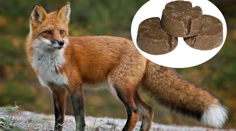vulpe-momeala-antirabic