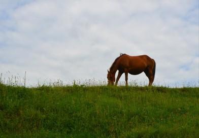 Hoți de cai, cercetați de polițiști