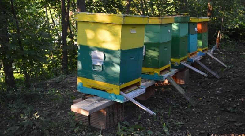 tibulca-miere-albine