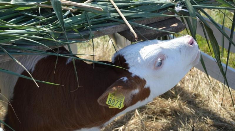agro-zoo-vitel