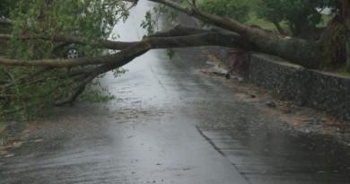 copac-cazut-vremea-rea