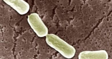clostridium-botulinum