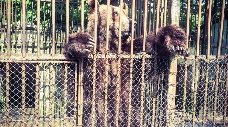 urs_zoo