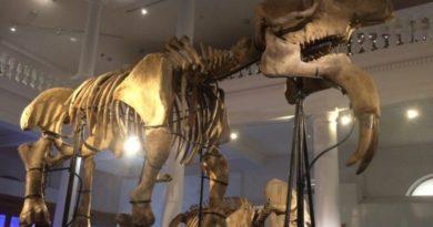 Povestea monstrului preistoric de la Antipa, găsit în Vaslui