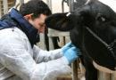 Medicii veterinari concesionari vor primi lunar câte 10.000 lei, de la  ANSVSA