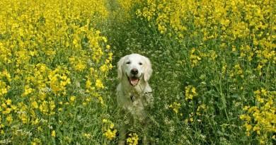 Studiu: Câinele, cel mai iubit animal de companie