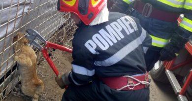 Pisoi blocat în gard, salvat de pompierii bârlădeni