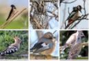 APM marchează Ziua Internaţională a Păsărilor prin discuții cu  elevii