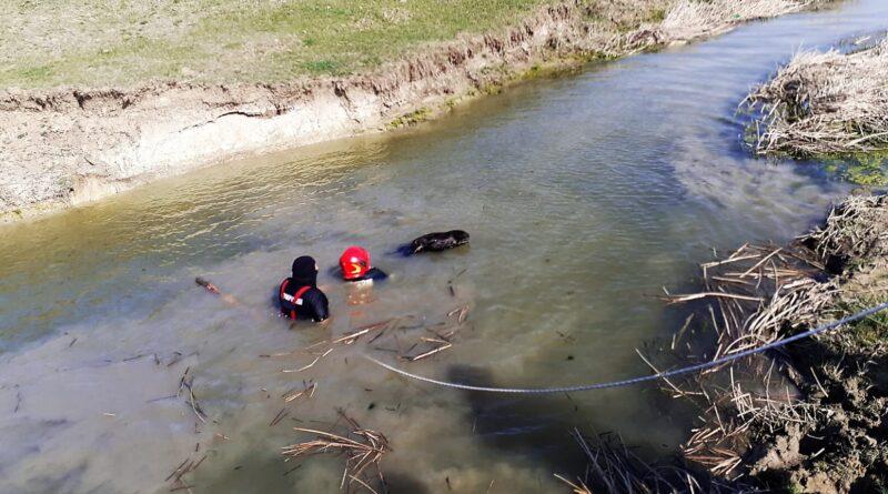 Cal salvat de pompieri, din apele râului Bârlad